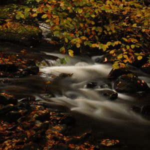 autumn in ireland colligan woods waterford images for sale